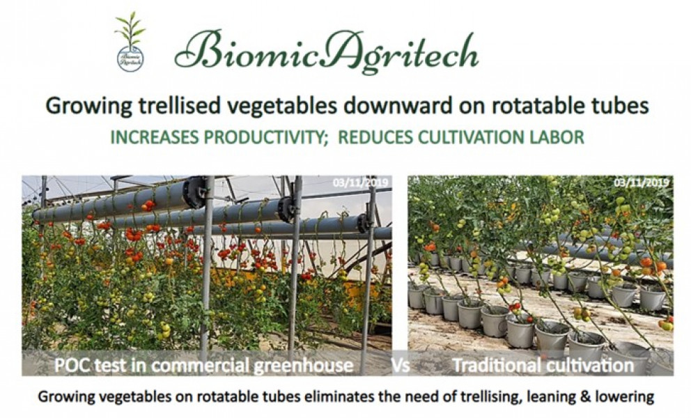 Israeli company is looking for dutch large greenhouse to demonstrate its trellising and leaning&lowering technology
